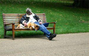 strutture pet friendly per cani